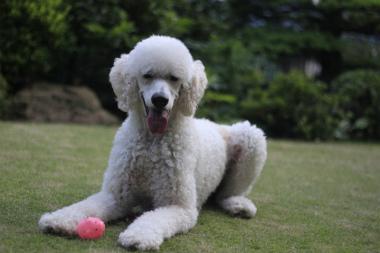 f:id:dog_life_saving:20140622071802j:image