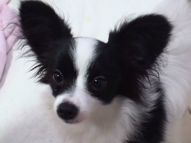 f:id:dog_life_saving:20140710203948j:image