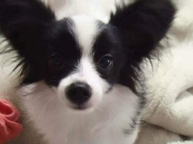 f:id:dog_life_saving:20140710203949j:image