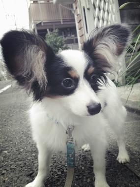 f:id:dog_life_saving:20140710205726j:image