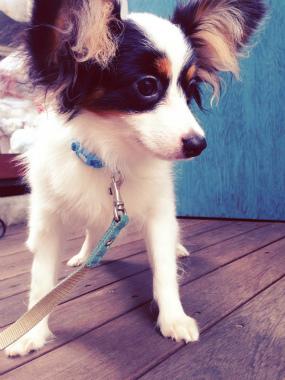 f:id:dog_life_saving:20140710205727j:image