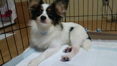f:id:dog_life_saving:20140710205728j:image