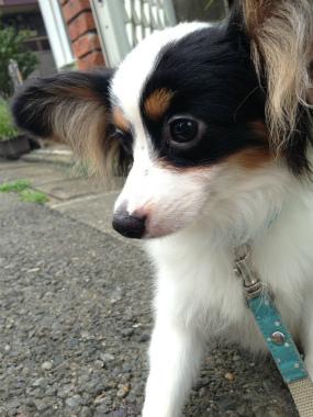 f:id:dog_life_saving:20140710205730j:image