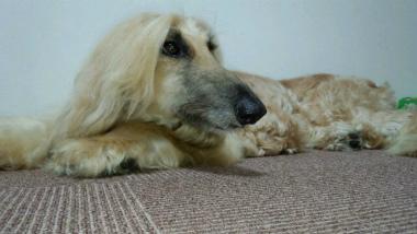 f:id:dog_life_saving:20140723223919j:image