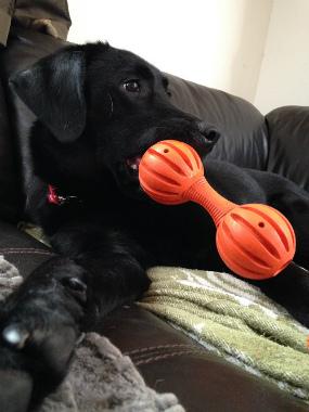 f:id:dog_life_saving:20140723224911j:image