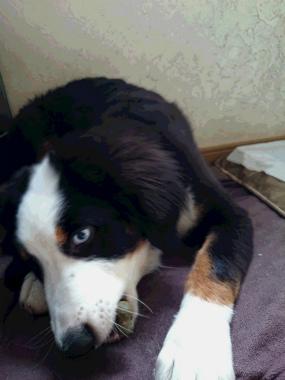 f:id:dog_life_saving:20140723230656j:image