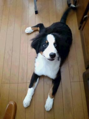 f:id:dog_life_saving:20140723230659j:image