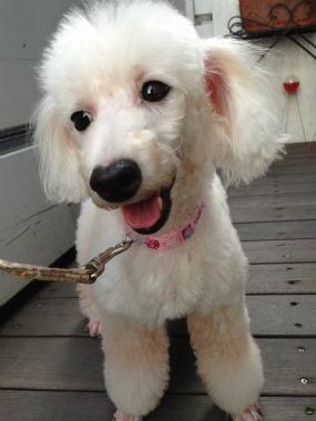 f:id:dog_life_saving:20140809071837j:image