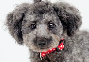 f:id:dog_life_saving:20140809072727j:image