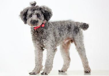 f:id:dog_life_saving:20140809072729j:image