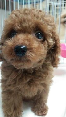 f:id:dog_life_saving:20140829213350j:image