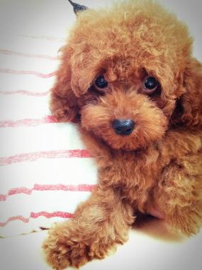 f:id:dog_life_saving:20140829213352j:image