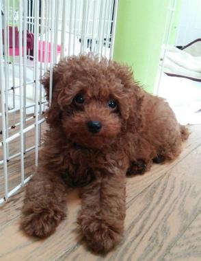 f:id:dog_life_saving:20140829213353j:image