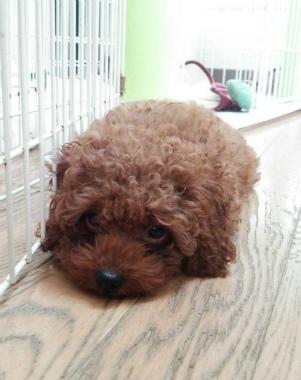 f:id:dog_life_saving:20140829213354j:image