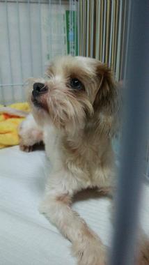 f:id:dog_life_saving:20140829220140j:image