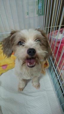 f:id:dog_life_saving:20140829220141j:image