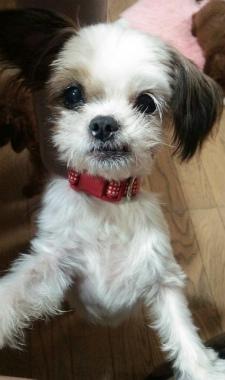 f:id:dog_life_saving:20140901190209j:image