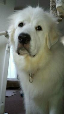 f:id:dog_life_saving:20140915081532j:image
