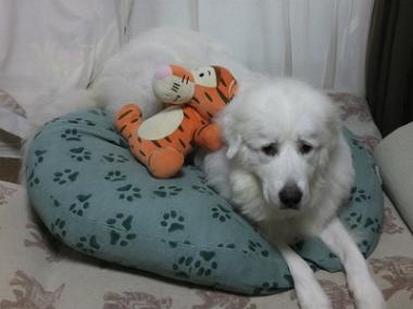 f:id:dog_life_saving:20140915081534j:image