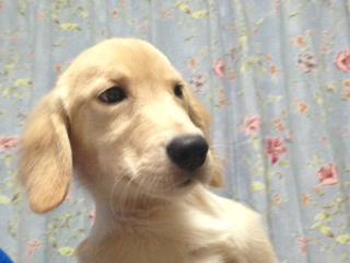 f:id:dog_life_saving:20141015193336j:image
