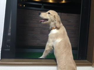 f:id:dog_life_saving:20141015193339j:image