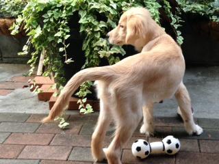 f:id:dog_life_saving:20141015193340j:image