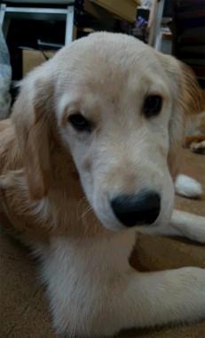 f:id:dog_life_saving:20141020212803j:image