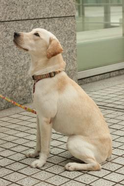 f:id:dog_life_saving:20141022200807j:image