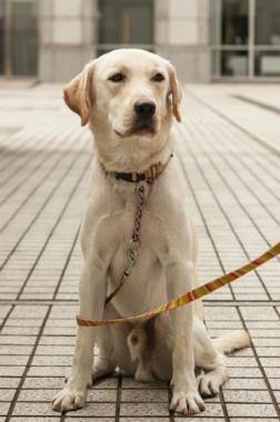 f:id:dog_life_saving:20141022200809j:image