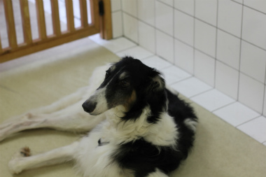 f:id:dog_life_saving:20141022201353j:image