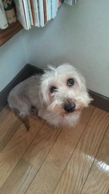 f:id:dog_life_saving:20141101134236j:image