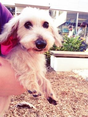 f:id:dog_life_saving:20141101134238j:image