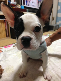 f:id:dog_life_saving:20141103104545j:image