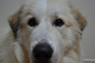 f:id:dog_life_saving:20141104221038j:image