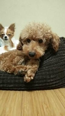 f:id:dog_life_saving:20141120215327j:image