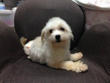 f:id:dog_life_saving:20141120221541j:image