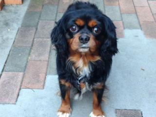 f:id:dog_life_saving:20141122211424j:image