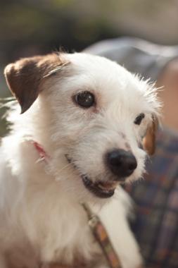 f:id:dog_life_saving:20141122213501j:image