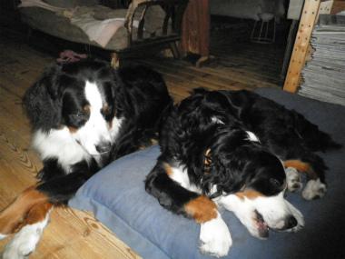 f:id:dog_life_saving:20141207190806j:image