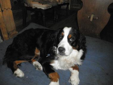 f:id:dog_life_saving:20141207190808j:image