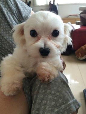 f:id:dog_life_saving:20141221212235j:image