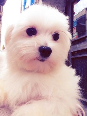 f:id:dog_life_saving:20141221212238j:image