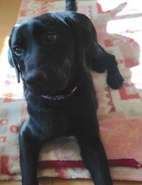 f:id:dog_life_saving:20150122221625j:image