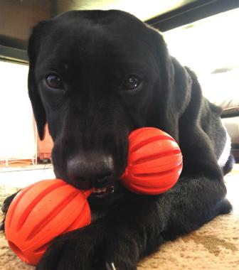 f:id:dog_life_saving:20150122221626j:image