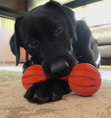 f:id:dog_life_saving:20150122221627j:image