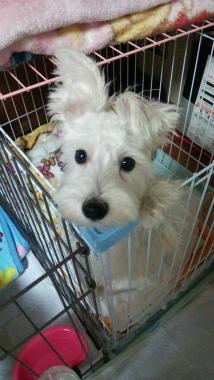 f:id:dog_life_saving:20150122224202j:image