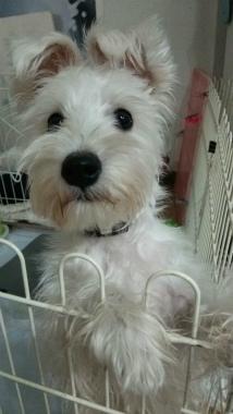 f:id:dog_life_saving:20150122224205j:image