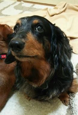 f:id:dog_life_saving:20150209205949j:image