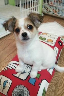 f:id:dog_life_saving:20150308115816j:image