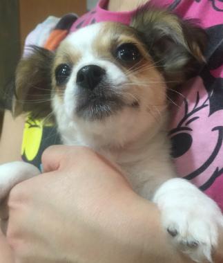 f:id:dog_life_saving:20150308115818j:image